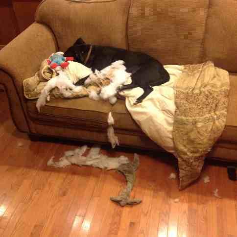 Bad Dog. Photo by Risky Carolyn