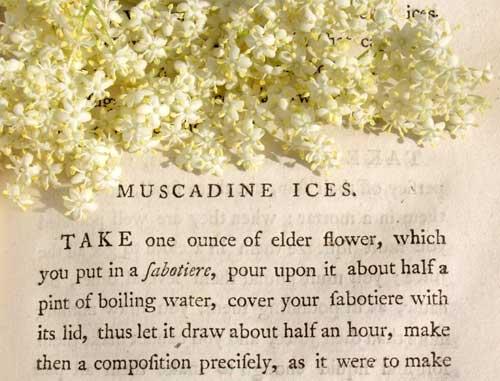 muscadine-ice