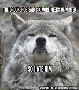 groundhog_wolf